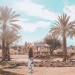 Palm trees мобильный пресет