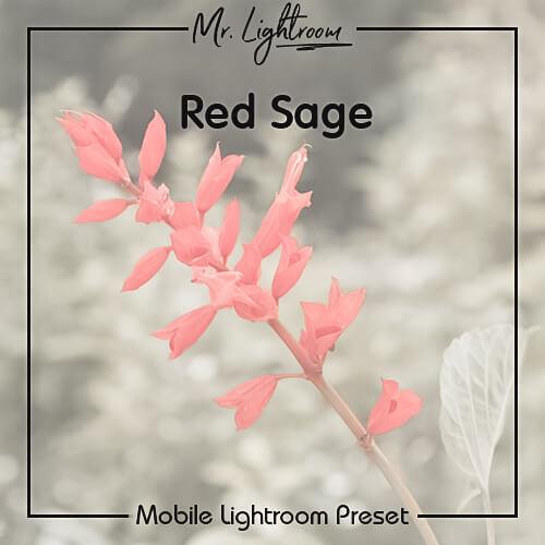 Бесплатный пресет для Lightroom Mobile